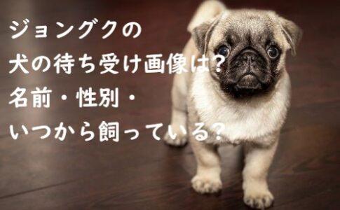 ジョングク 犬
